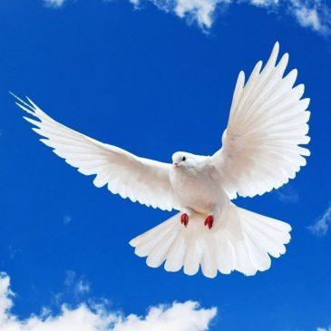 Pourquoi Dieu a béni une colombe
