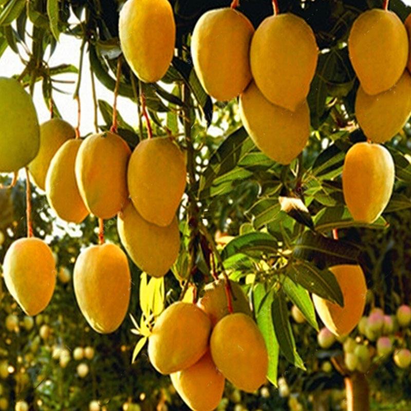 7 façons de fruits portant dans le Royaume de Dieu