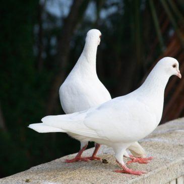 Les oiseaux espions de Dieu