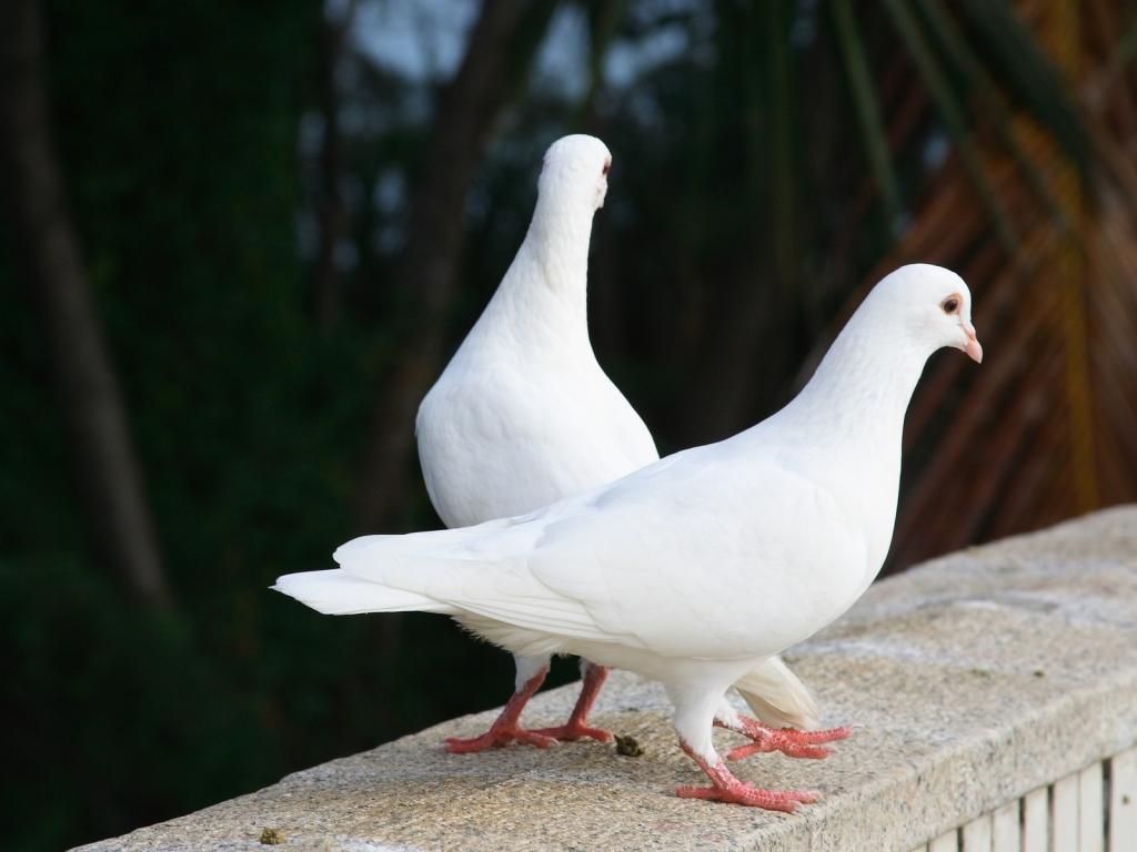 God's spy birds